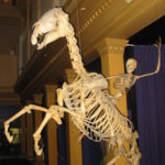 Profile picture of Skelebone